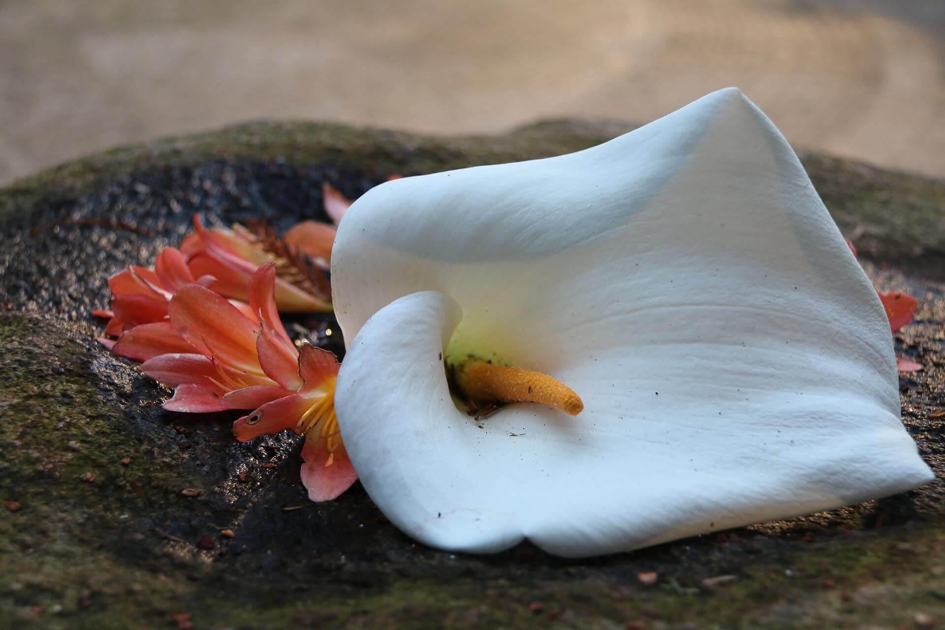 A Flower John Luhr Photography